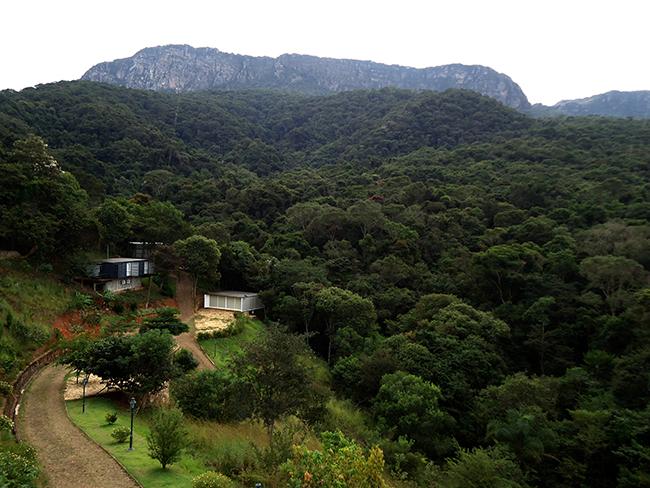 Bichinho Minas Gerais
